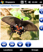 free Pocket Butterflies Singapore V1.1 for windows mobile phone
