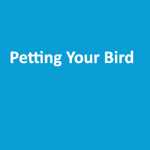 Petting Your Bird